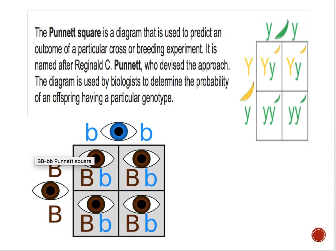 Thursday March 8th 2018 Megonigals Grade Science Punnett Square Diagram Picture