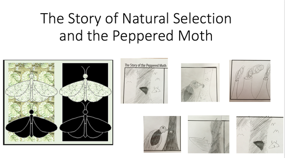 Peppered Moth Megonigal 39 S 8th Grade Science